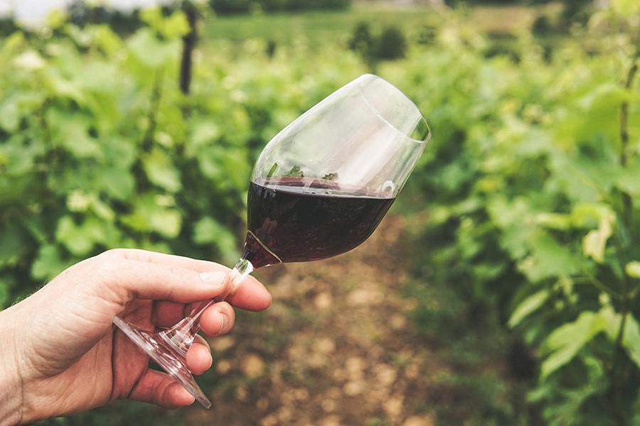 bicchiere di vino rosso in vigna
