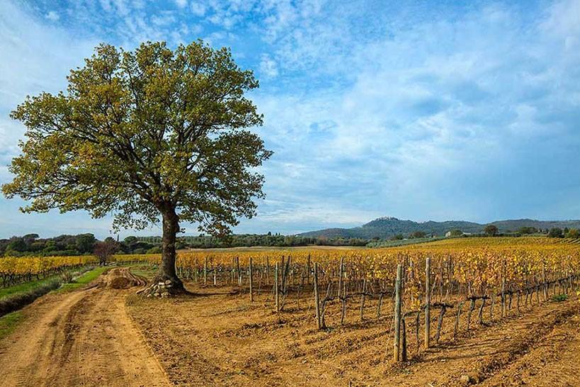 Degustazione di vini a Montalcino Visita guidata in vigna